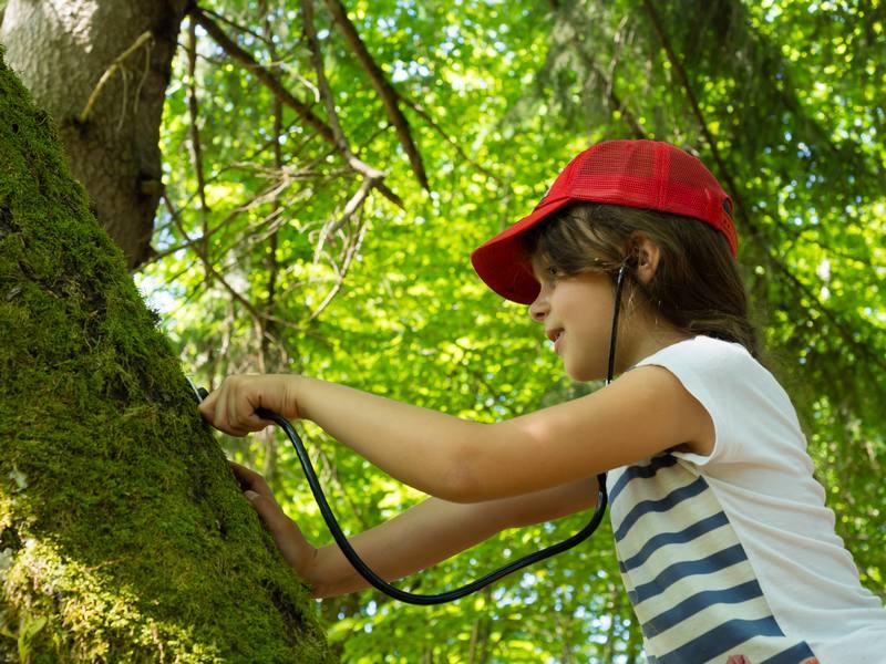 Alsace Écotourisme – Le réveil de la forêt