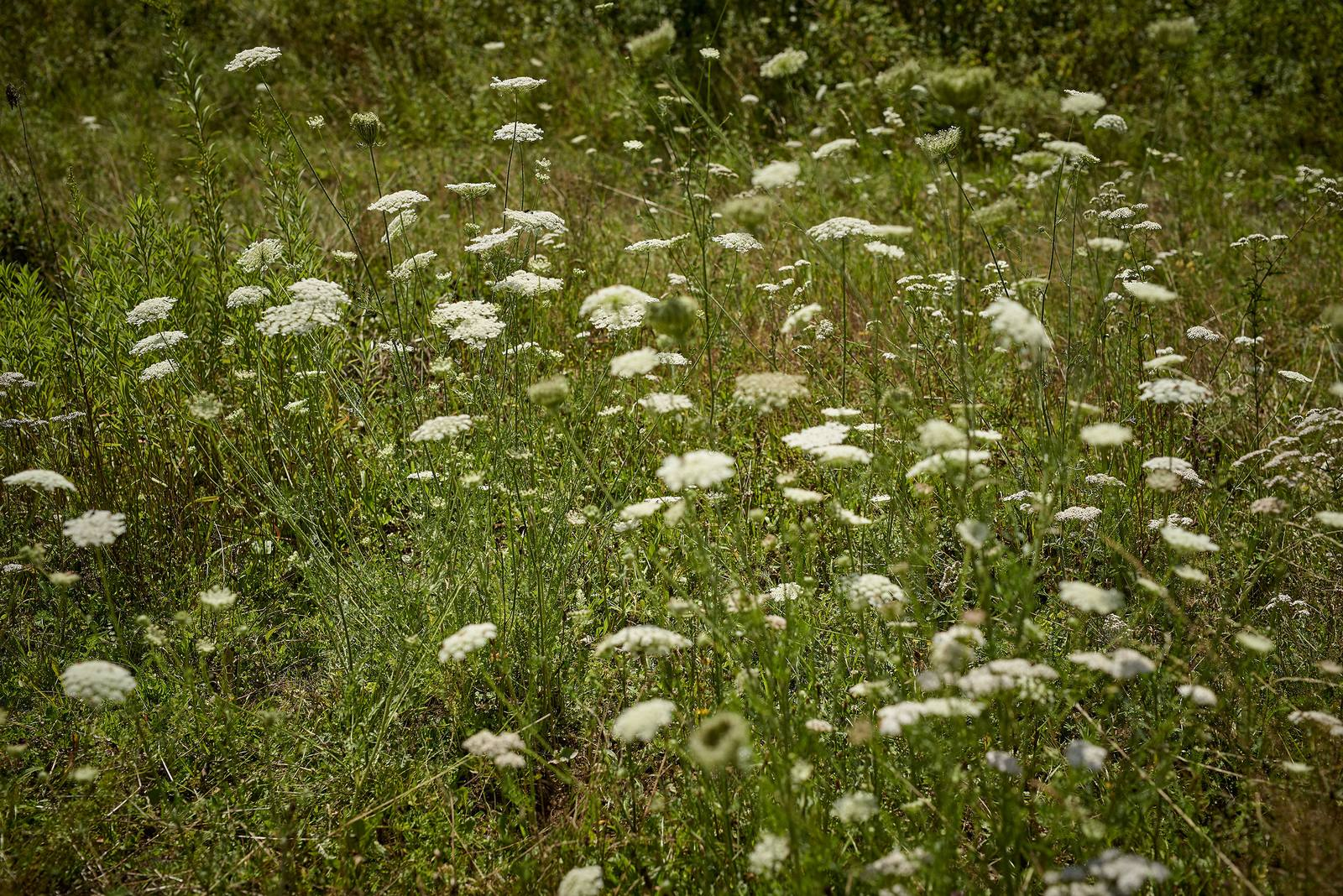 Alsace Écotourisme – Sur les traces des trappeurs moderne