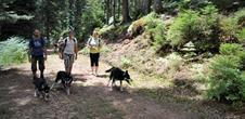Cani rando raquettes avec Les huskys randonneurs