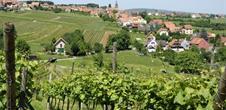Weinlehrpfad von Heiligenstein-