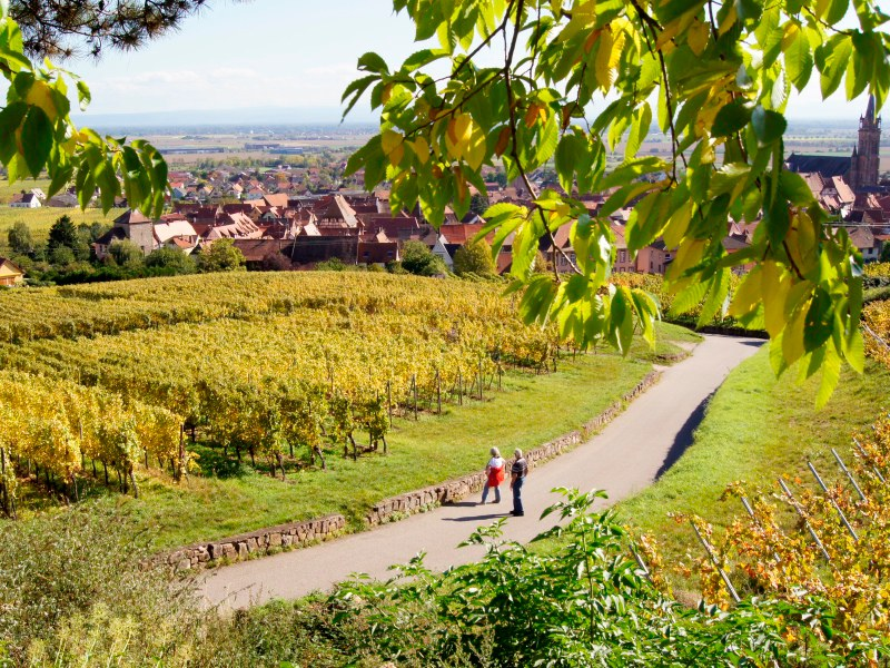 Delights in Alsace