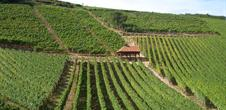Balade gastro-vinique