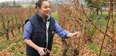 Domaine BACHERT, vins et produits régionaux