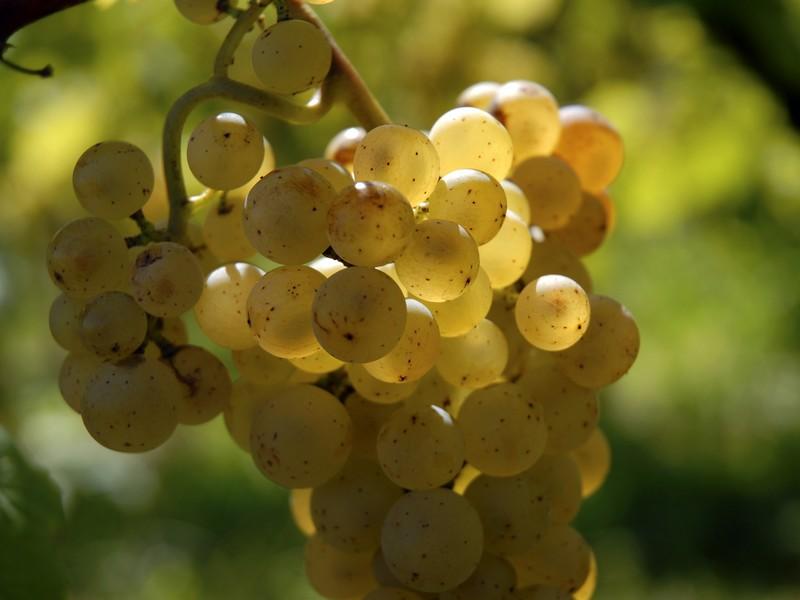 La Vin'guette du vignoble