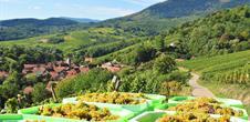 Bernardvillé, a historic site surrounded by vineyards