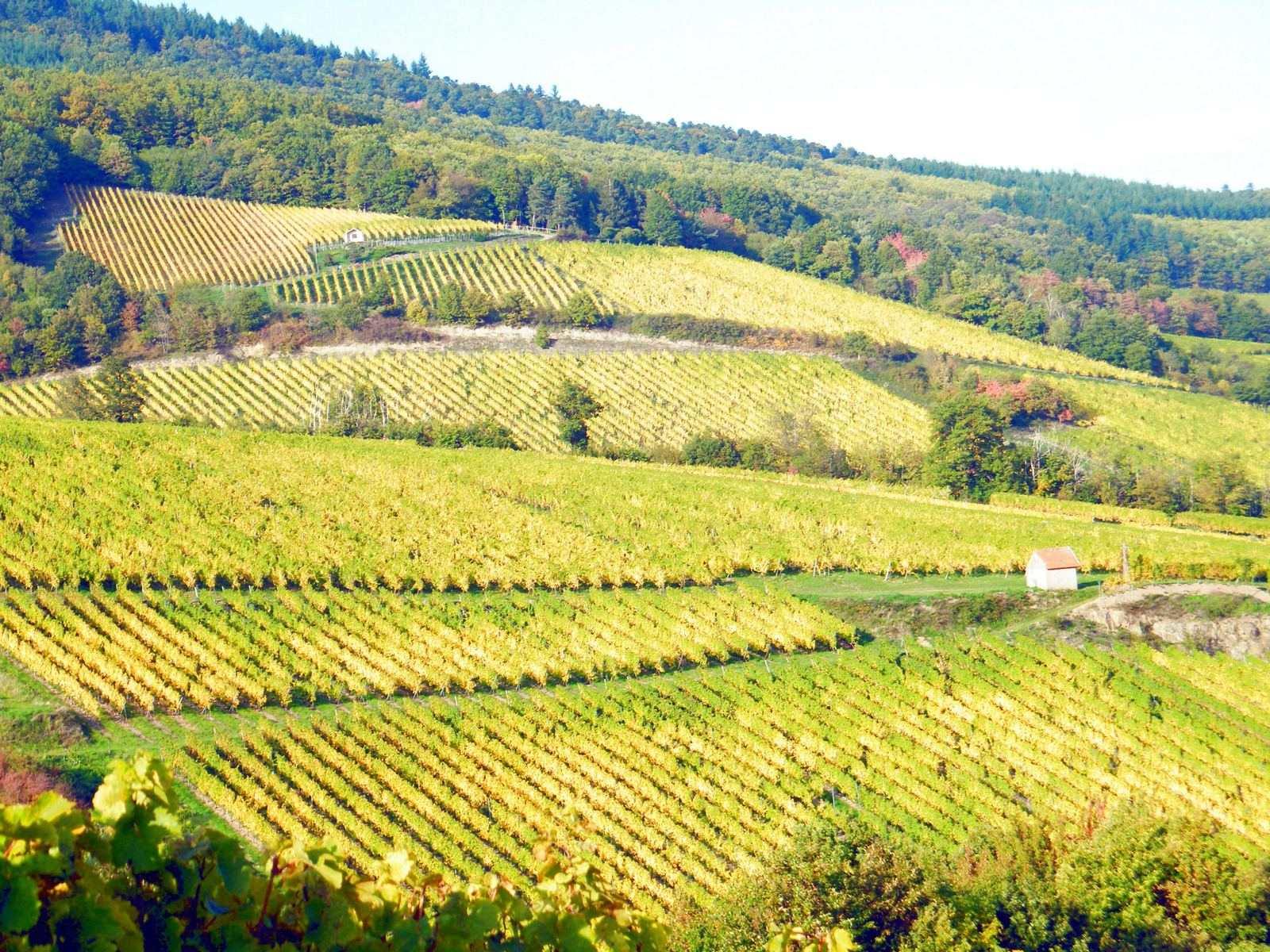 La route des vins en pente douce