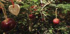 Christmas Cellar - Domaine Armand Hurst