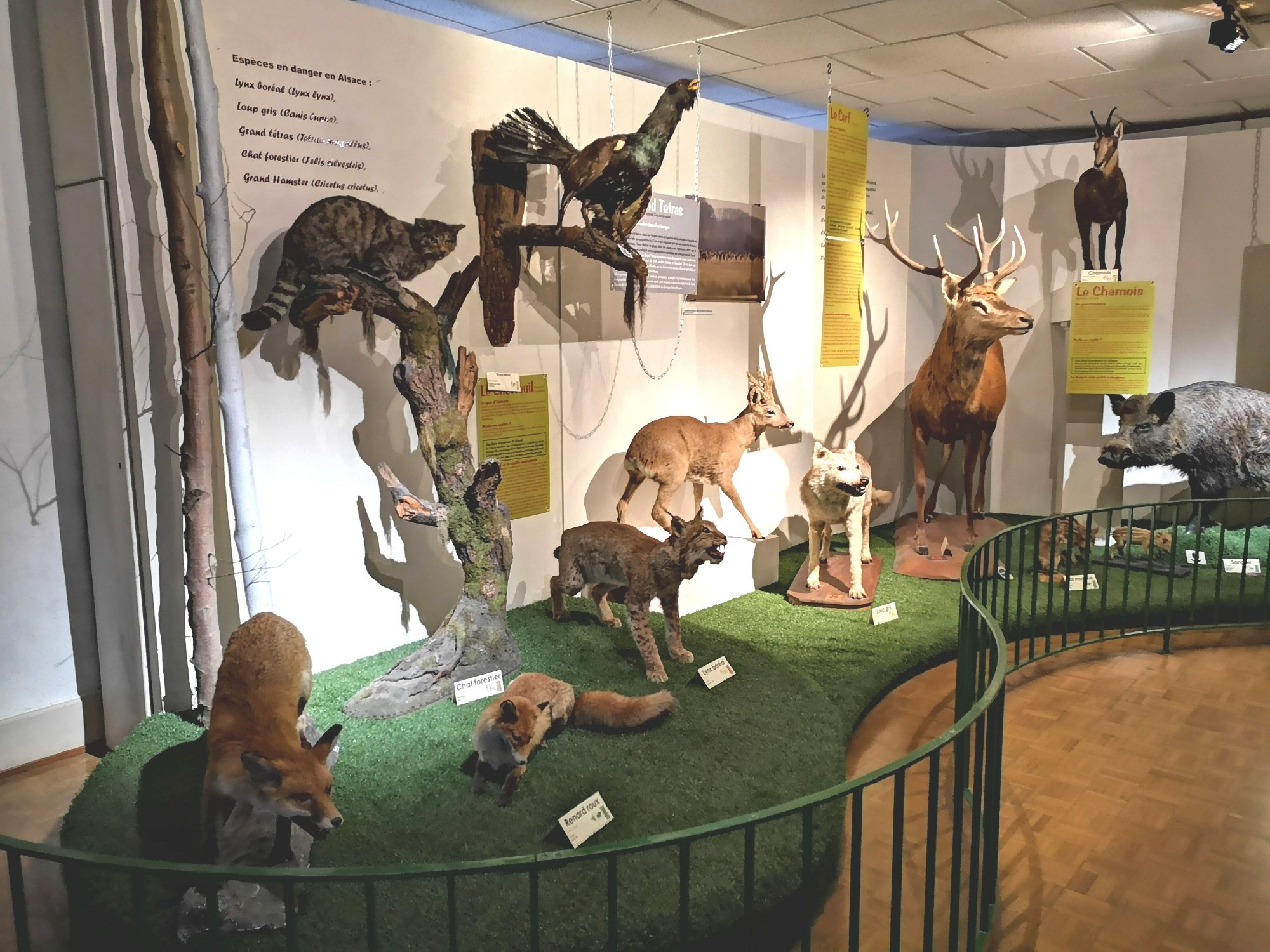 Natural history and ethnography Museum