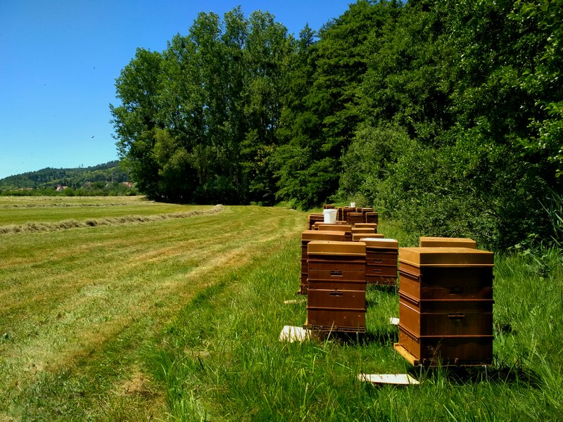Honey production - Mrs Hubrecht