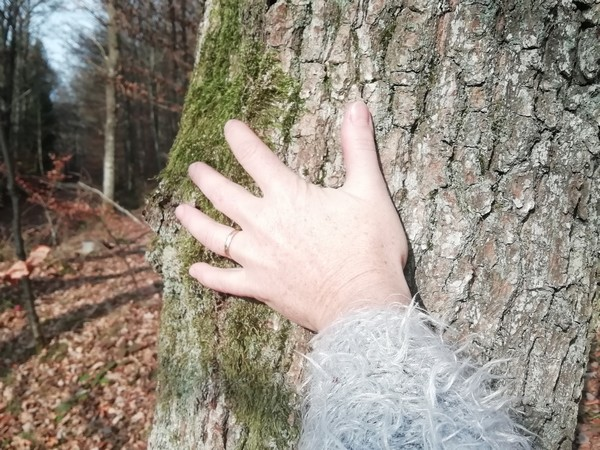 Séance de sylvothérapie en forêt