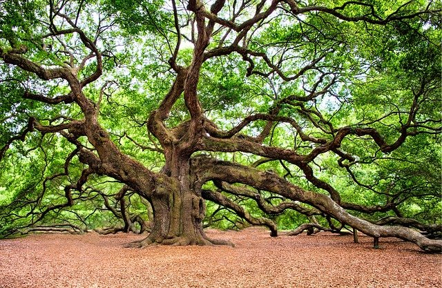 Balade: la grand chêne et ses secrets