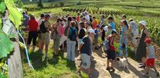 Guided tour of the Eguisheim's vineyard path