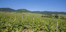 Sentier viticole Eguisheim
