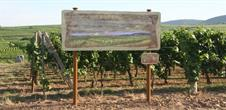 Sentier viticole des Grands Crus d'Eguisheim