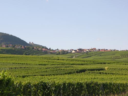 Voegtlinshoffen, Pays de Rouffach, Vignobles et Châteaux, Haut-Rhin, Alsace