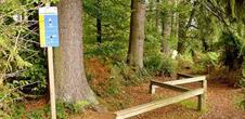 Parcours de santé Forêt du Niederwald