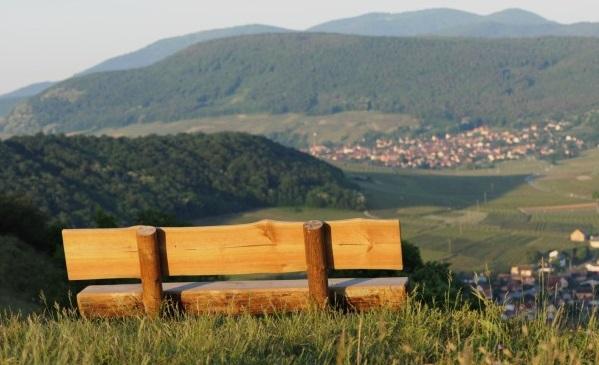 Sentier vignoble et collines sèches (Bollenberg)