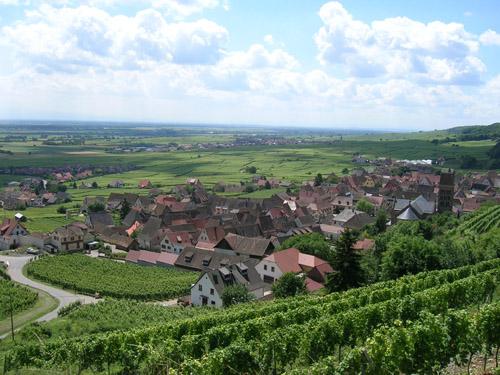Vignoble, Gueberschwihr, Pays de Rouffach, Vignobles et Châteaux, Haut-Rhin, Alsace