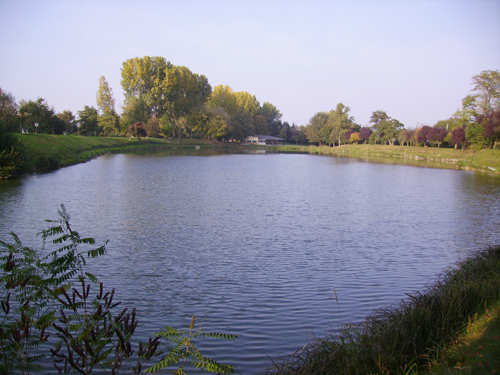 Etang Aimé-Gerber, Rouffach, Canton de Rouffach, Haut-Rhin, Alsace