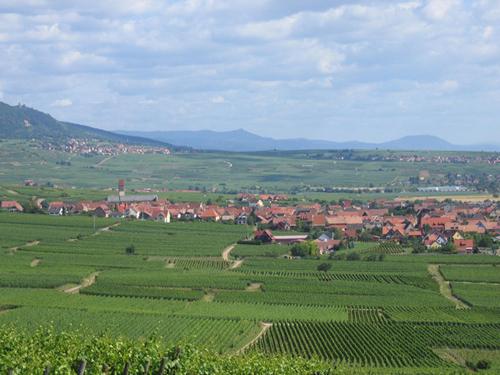 Grand Cru Steinert, Pfaffenheim, Pays de Rouffach, Vignobles et Châteaux, Haut-Rhin, Alsace