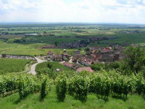 Grand Cru Goldert, Gueberschwihr, Pays de Rouffach, Vignobles et Châteaux, Haut-Rhin, Alsace