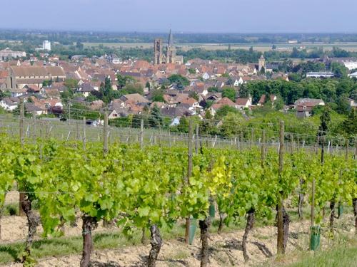 Grand Cru Vorbourg, Rouffach, Pays de Rouffach, Vignobles et Châteaux, Haut-Rhin, Alsace