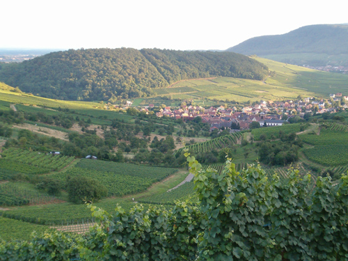 Grand Cru Zinnkoepflé, Westhalten, Pays de Rouffach, Vignobles et Châteaux, Haut-Rhin, Alsace