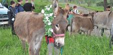 Bijane, promenade à dos d'ânes