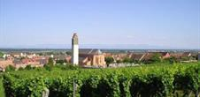 Guided tour through the vineyard from Pfaffenheim