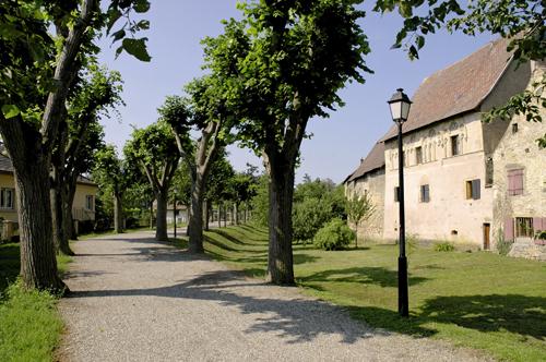 https://apps.tourisme-alsace.info/photos/eguisheim/photos/253002291_1.jpg