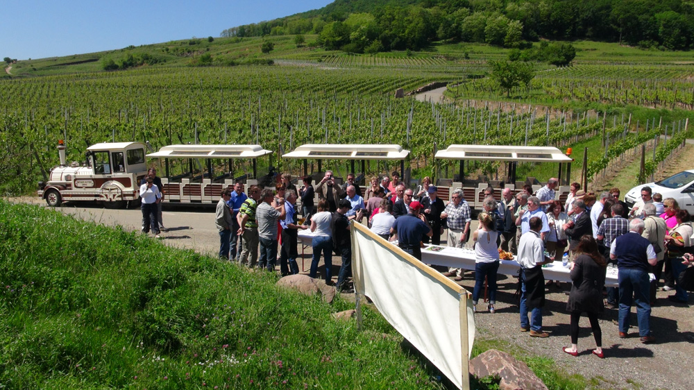 The Vineyard's Gastronomic Train : Schauenberg
