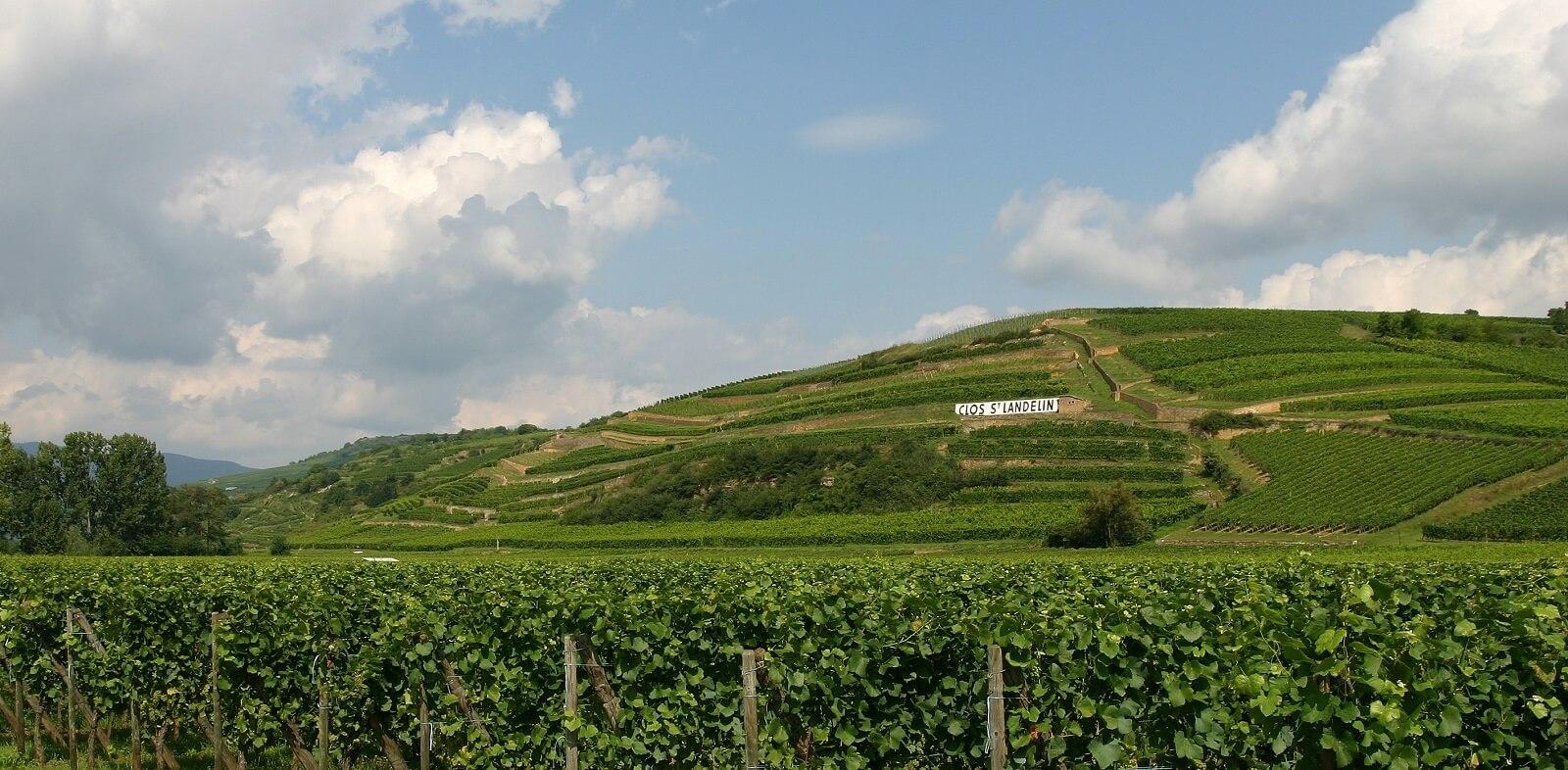 Vins René Muré - Clos Saint-Landelin, Rouffach, Pays de Rouffach, Vignobles et Châteaux, Haut-Rhin, Alsace