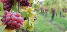 Vins EARL Lucien MEYER