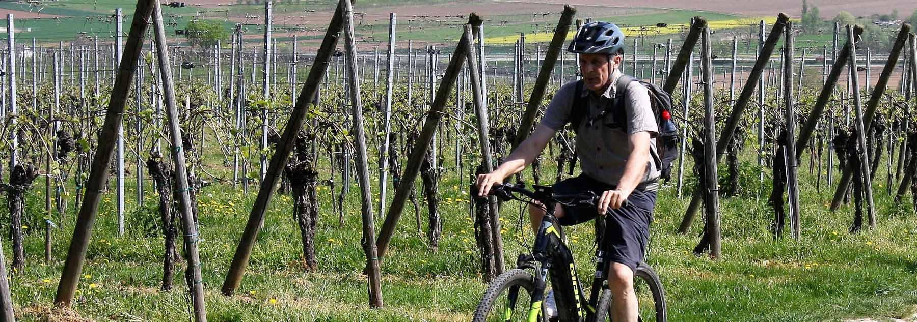 Vélo'vignes - Découverte d'un vignoble bio en VTT éléctrique