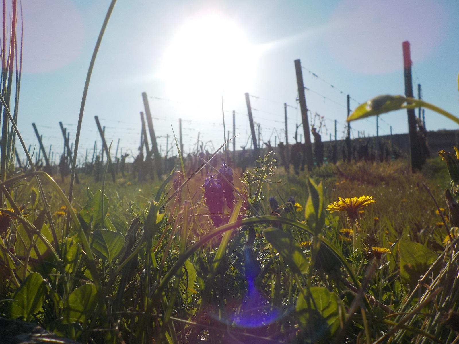 The Vineyard's Gastronomic Train : Strangenberg