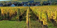 Conférence : Eguisheim et ses terroirs