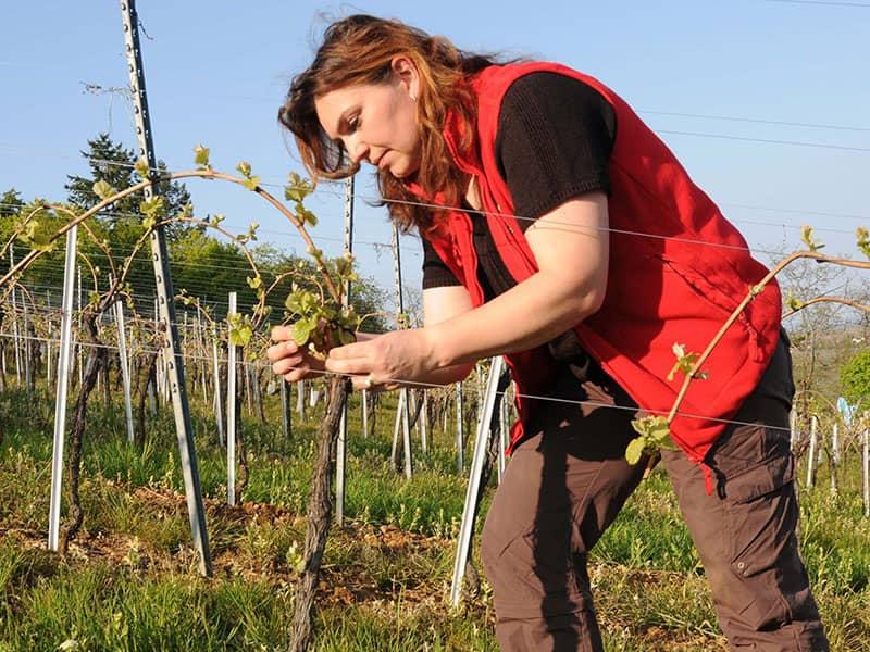 Formule découverte : Osez le vin au féminin - Gueberschwihr