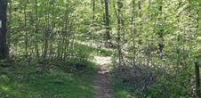 Sentier nature du Loosthal