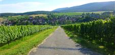 Sentier viticole de Cleebourg