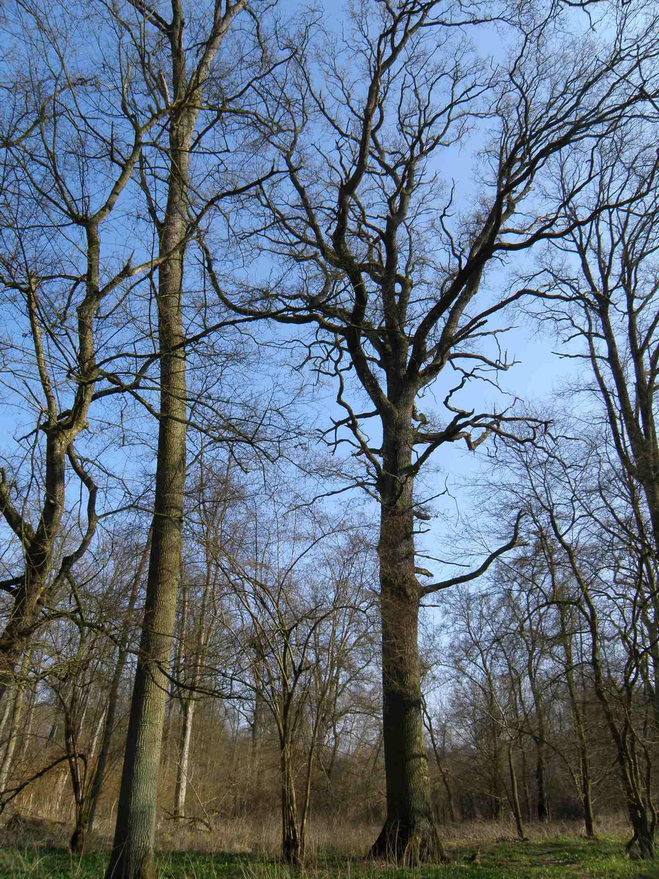 Promenade dans la forêt de l'Ill*wald