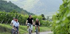 Mountain bike trail : vineyard
