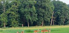 Alsace Écotourisme – Le daim, une escapade dans l'Illwald