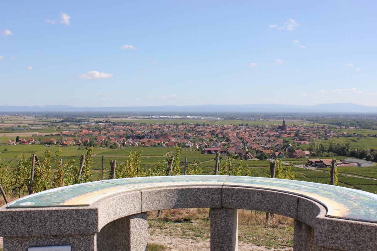 Sentier viticole de Scherwiller