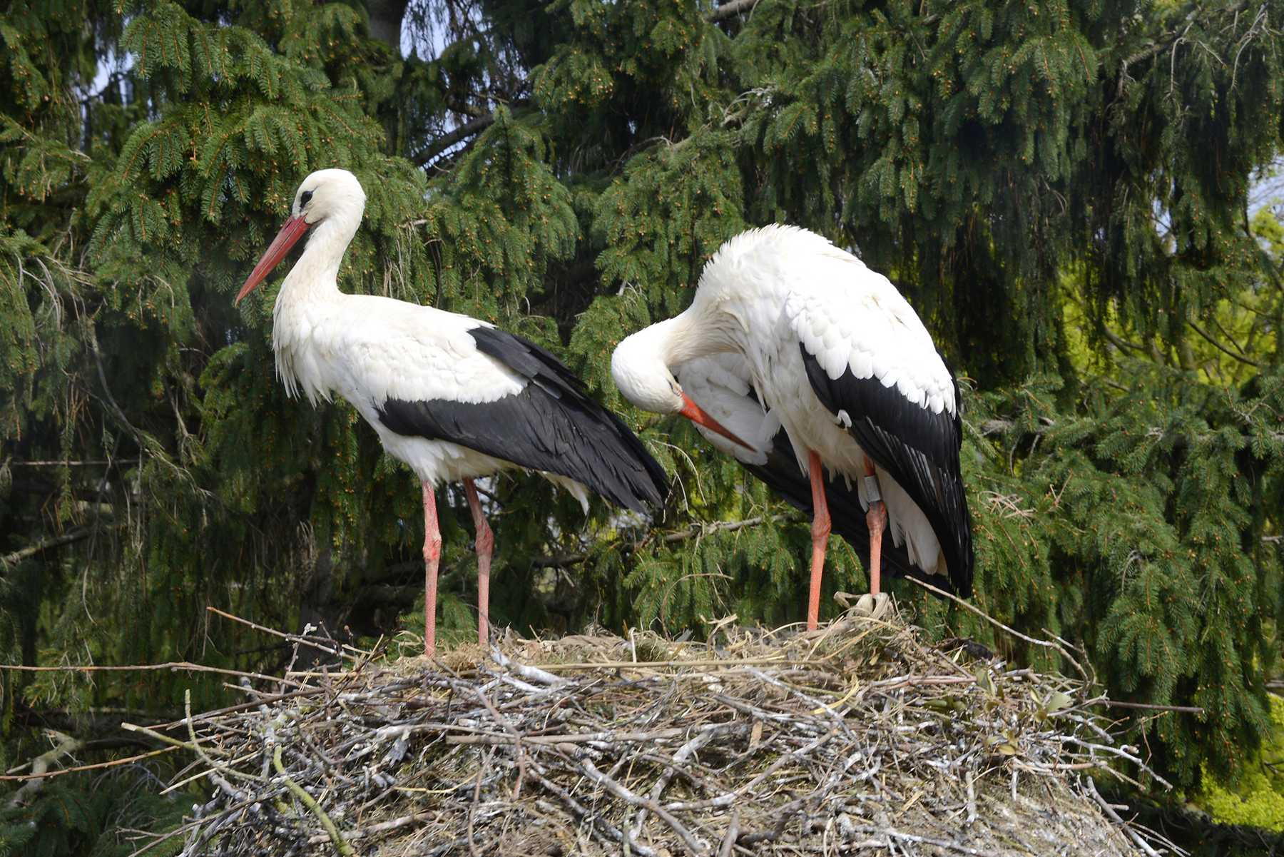 Cigoland - Storks and leisure park