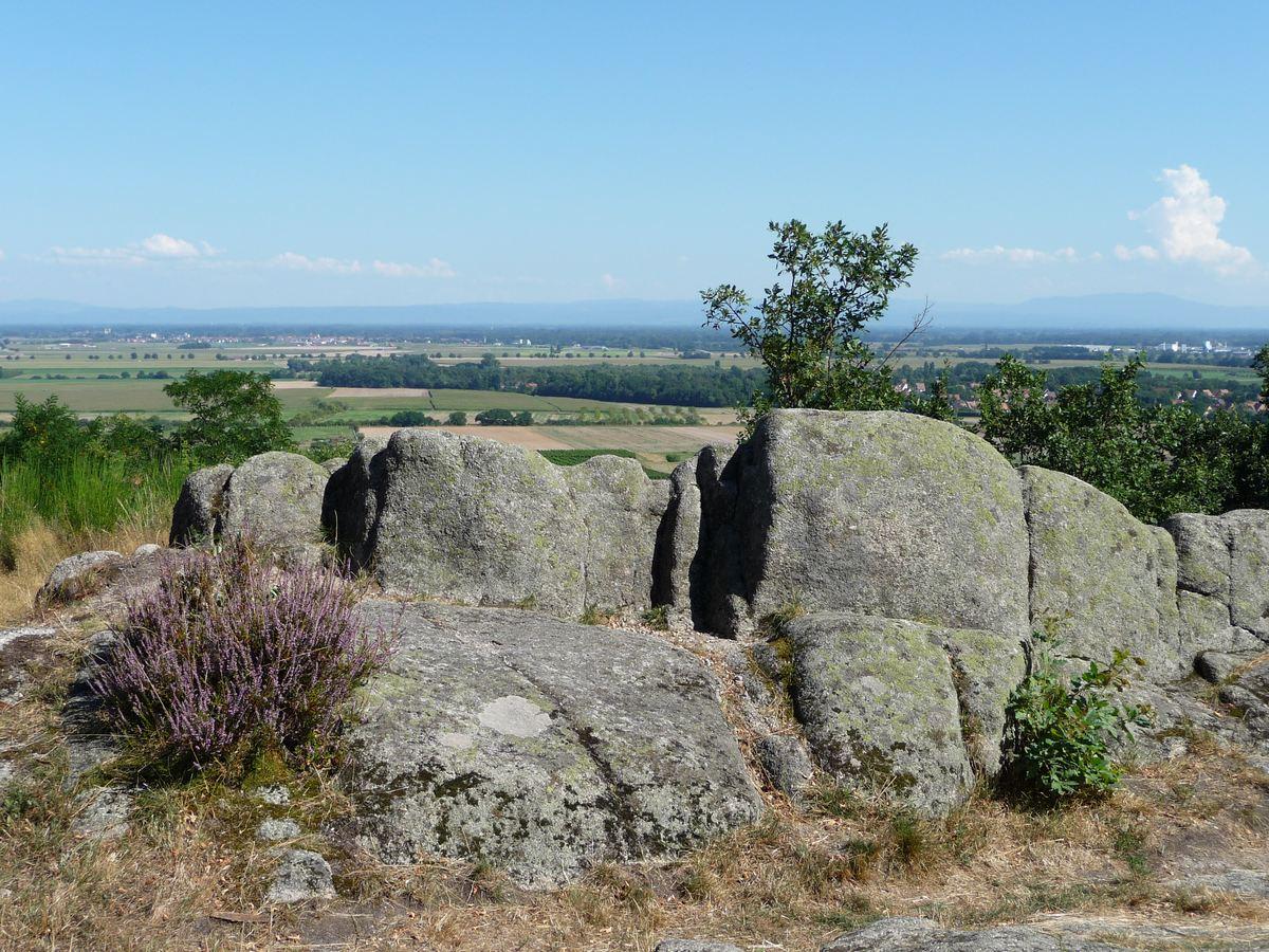 Sentier des Murailles et des Vignes - Dieffenthal