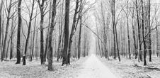 Sortie : Quand l'hiver vient, l'Illwald sommeille