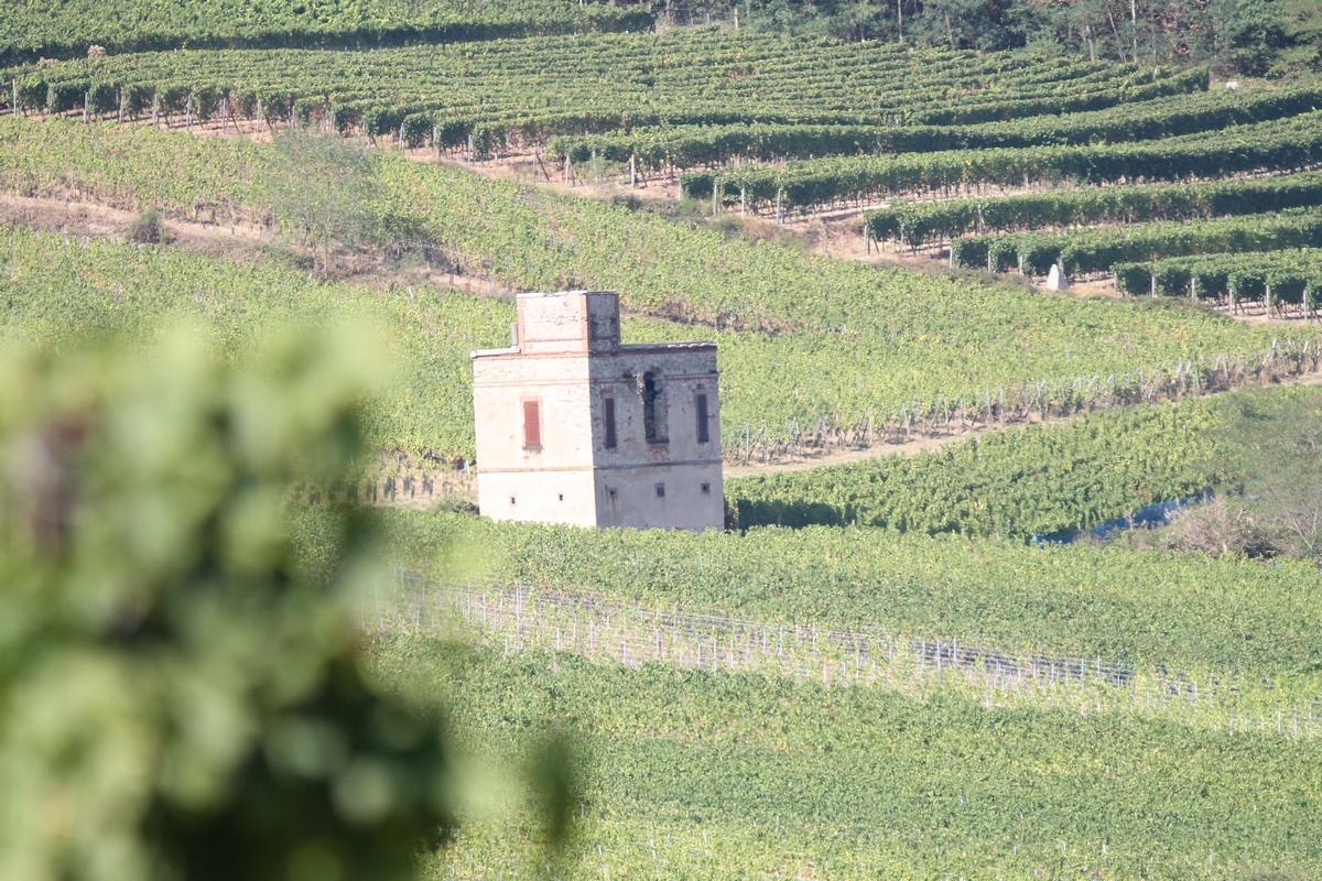 """Visite guidée : sentier """"Murailles et Vignes"""""""