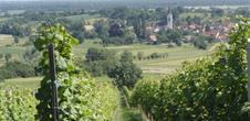 Hiking route: Wuenheim Wine Trail
