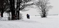 Circuit des auberges - raquettes à neige au Markstein
