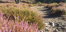 Circuit de randonnée ou de trail - entre grès et granit